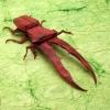 Cyclommatus Metalifer 2.0 (Kamiya Satoshi)