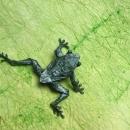 Tree Frog (Robert Lang)