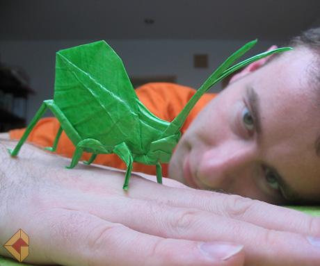 Leaf Katydid by Brian Chan