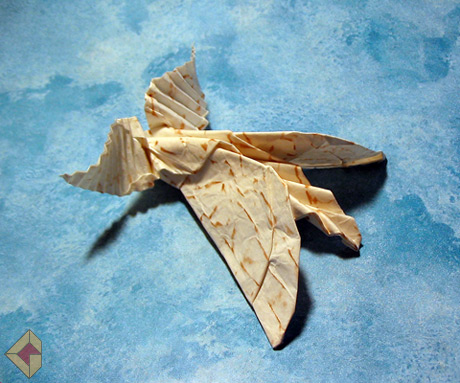 Moth designed and folded by Grzegorz Bubniak