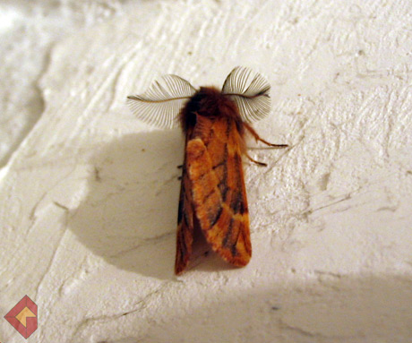 Moth caught on the wall